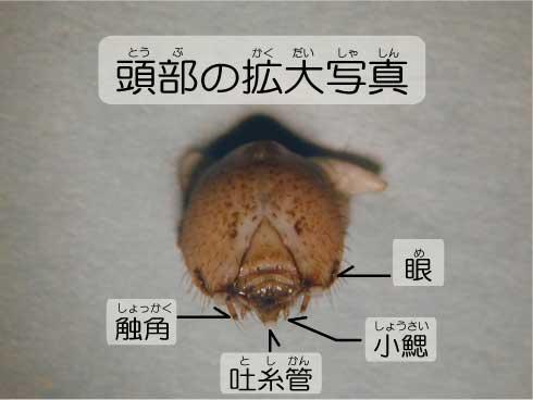 昆虫のヒミツ