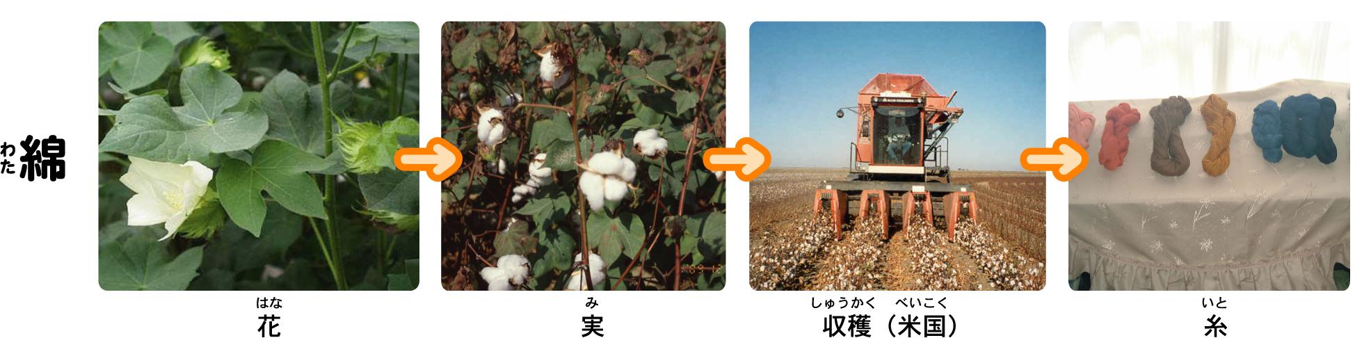 植物と着る/繊維植物